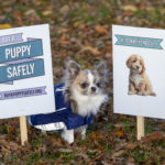 New drive to curb online puppy sales
